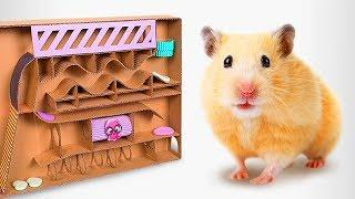 How To Make A Cardboard Labyrinth For Your Hamster Pets