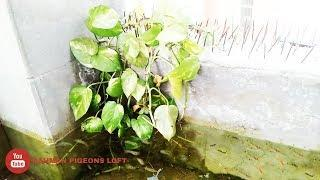 How to make easy guppy fish pond in roof of the house (যে ভাবে ছাদের ওপর গাপ্পি চাষ করবেন।) part 2