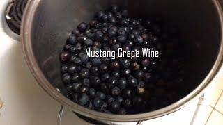 Mustang Grape Wine Processing and Recipe